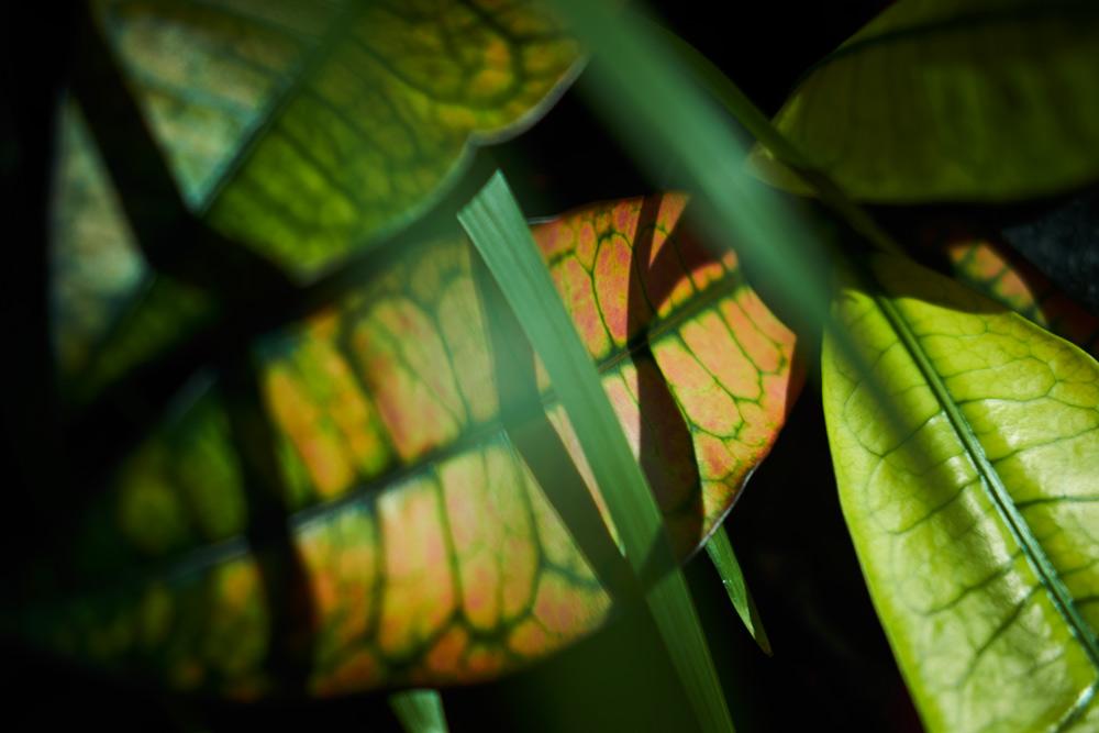 Gebouw N Hengelo flexwerken flextukkers groen (Tessa Wiegerinck)